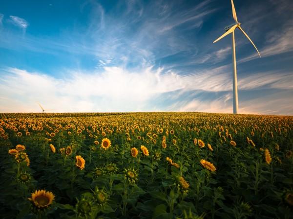 Sustainable energy - wind turbine